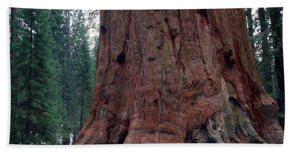 Giant Sequoia  Bath Towel