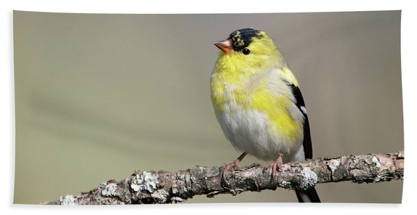 Gold Finch Hand Towel