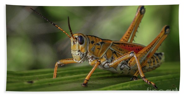 Bath Towel featuring the photograph Grasshopper And Palm Frond by Tom Claud