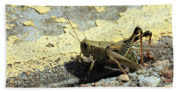 Grasshopper Laying Eggs Hand Towel