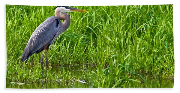 Great Blue Heron Waiting Hand Towel