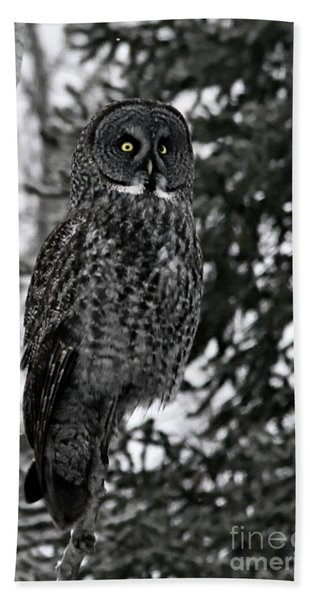 Great Grey Owl Portrait Bath Towel