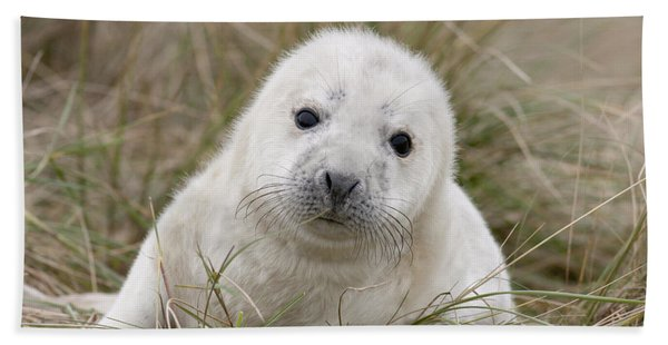 Grey Seal Pup Hand Towel