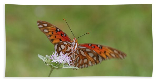 Gulf Fritillary On Elephantsfoot Hand Towel