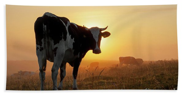 Holstein Friesian Cow Hand Towel