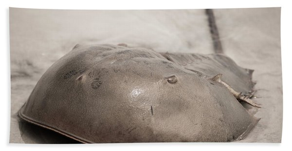 Horseshoe Crab Bath Towel