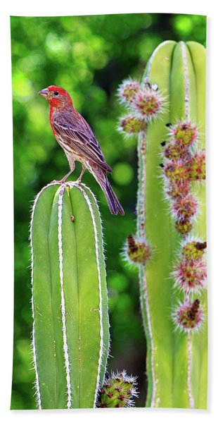 House Finch On Blooming Cactus Hand Towel
