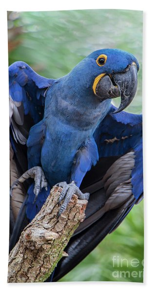 Hyacinth Macaw Bath Towel