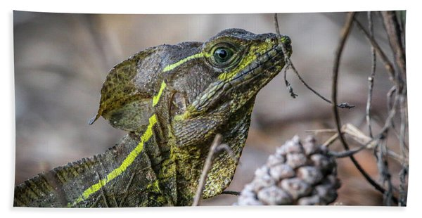 Bath Towel featuring the photograph Jesus Lizard #2 by Tom Claud