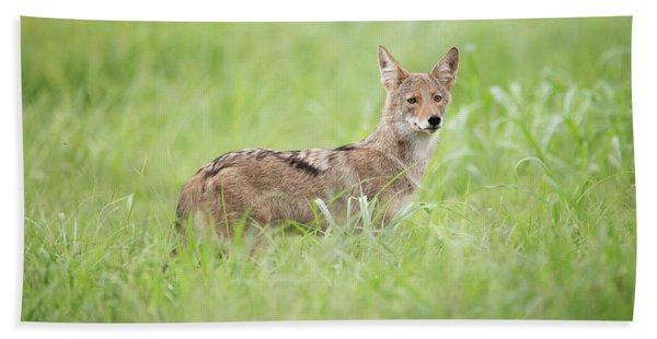 Juvenile Coyote Bath Towel