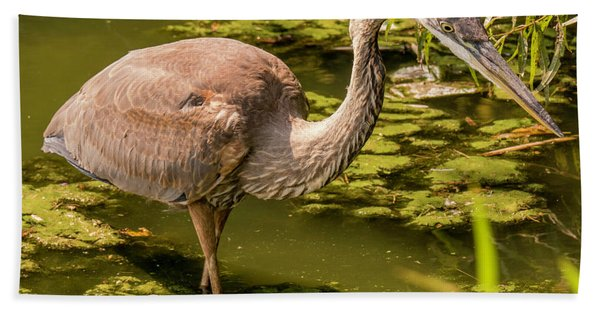 Juvenile Great Blue Heron Hand Towel