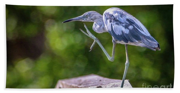Bath Towel featuring the photograph Juvenile Little Blue Heron by Tom Claud