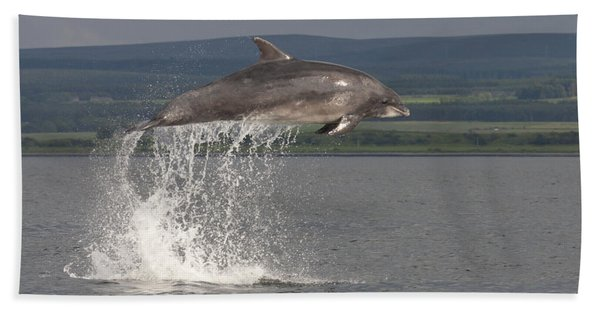 Leaping Bottlenose Dolphin  - Scotland #39 Hand Towel