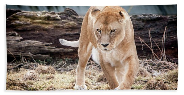 Lion Eyes Bath Towel