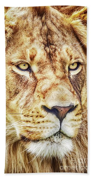 Lion Is The King Of The Jungle Bath Towel