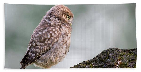 Little Owl Chick Practising Hunting Skills Hand Towel