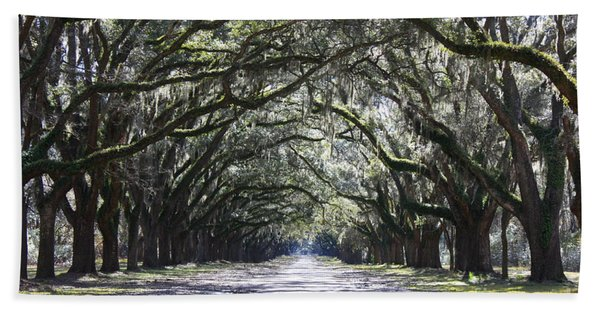 Live Oak Lane In Savannah Hand Towel