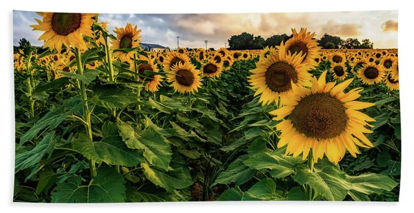 Long Island Sunflowers  Hand Towel