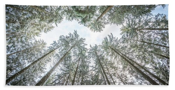 Looking Up In The Forest Bath Towel