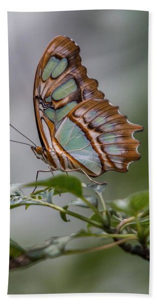 Bath Towel featuring the photograph Malachite Butterfly Profile by Patti Deters