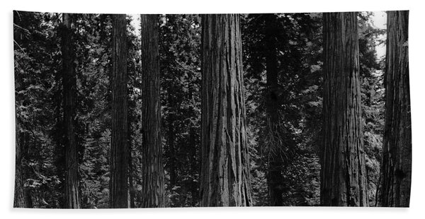 Mariposa Grove Yosemite  1901 Bath Towel