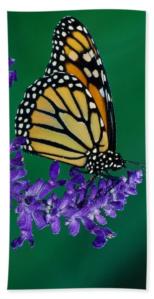 Monarch Butterfly On Flower Blossom Hand Towel
