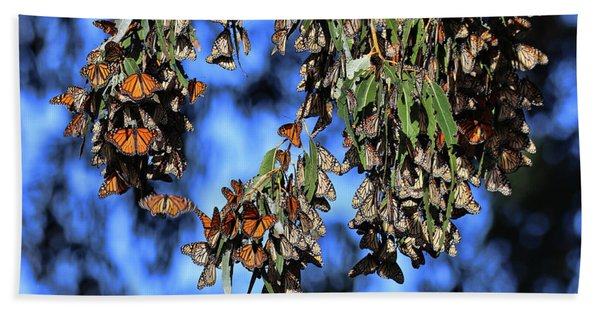 Monarch Groves Butterflies With  Blue Background Bath Towel
