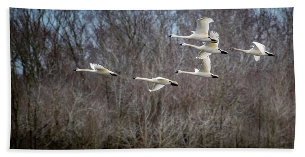 Morning Flight Of Tundra Swan Bath Towel
