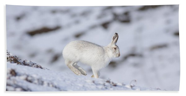 Mountain Hare - Scottish Highlands  #12 Hand Towel