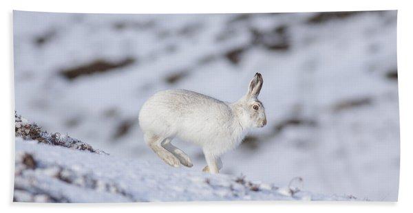 Mountain Hare - Scottish Highlands  #12 Bath Towel