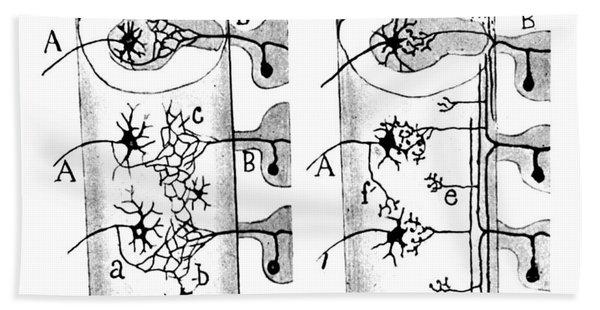 Neuroglia Cells Illustrated By Cajal Bath Towel