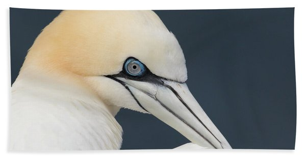 Northern Gannet At Troup Head - Scotland Hand Towel