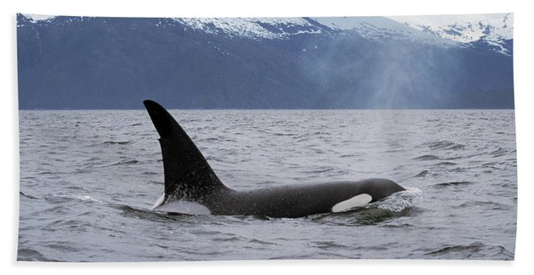 Orca Orcinus Orca Surfacing Bath Towel