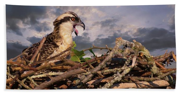 Osprey Talk Hand Towel