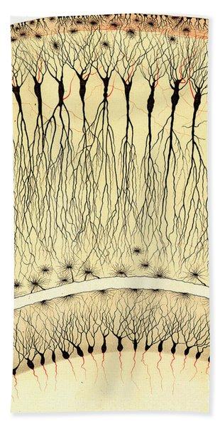 Pes Hipocampi Major Santiago Ramon Y Cajal Bath Towel
