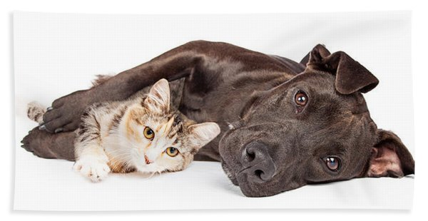 Pit Bull Dog And Kitten Cuddling Hand Towel
