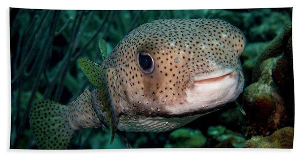 Porcupine Fish Hand Towel