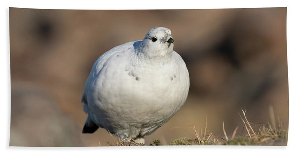 Ptarmigan Going For A Stroll Hand Towel