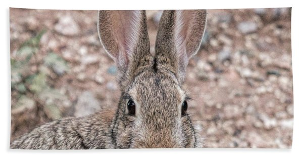 Rabbit Stare Hand Towel