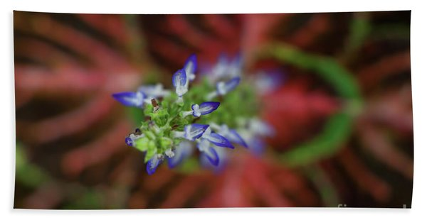 Rainbow Coleus Bath Towel
