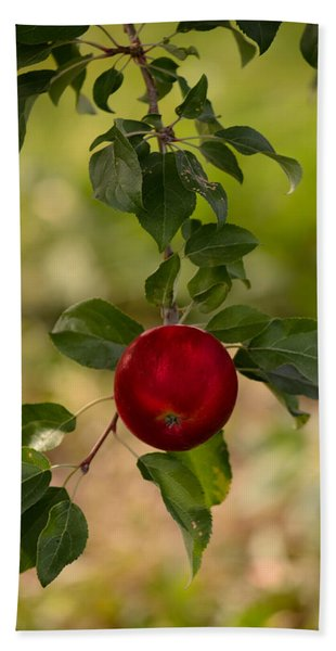 Red Apple Ready For Picking Hand Towel