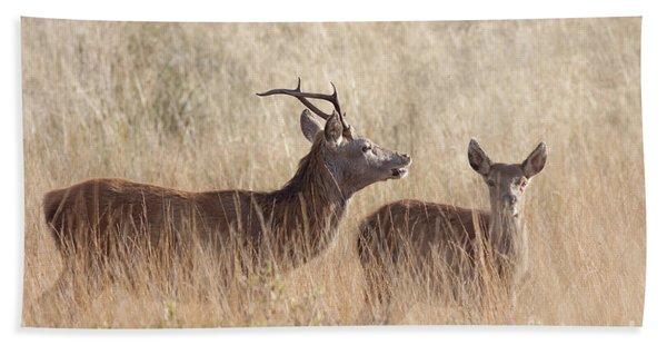 Red Deer Stag And Hind Bath Towel