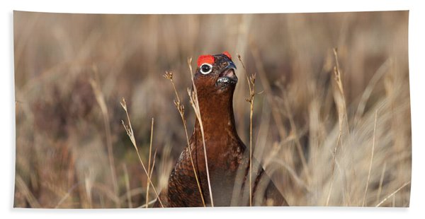 Red Grouse Calling Bath Towel