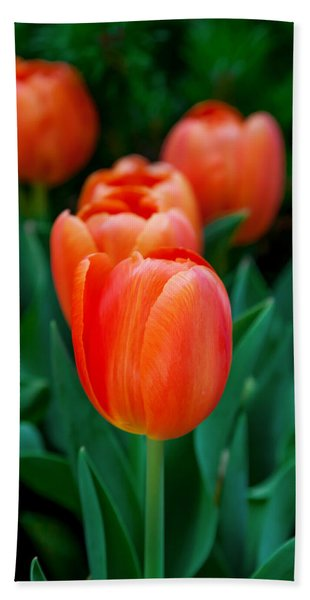 Red Tulips Hand Towel