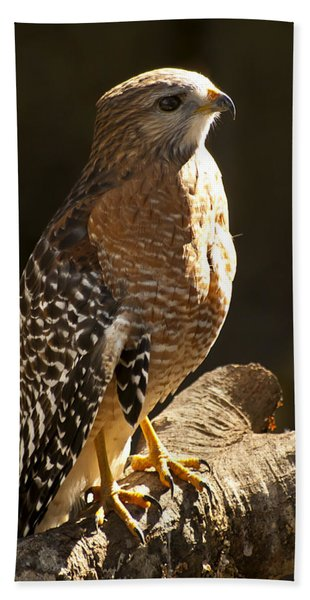 Bath Towel featuring the photograph Red-shouldered Hawk by Carolyn Marshall