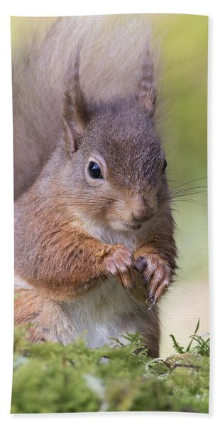 Red Squirrel - Scottish Highlands #1 Bath Towel