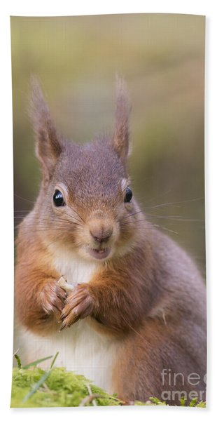 Red Squirrel - Scottish Highlands #18 Hand Towel