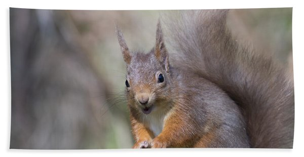 Red Squirrel - Scottish Highlands #26 Bath Towel