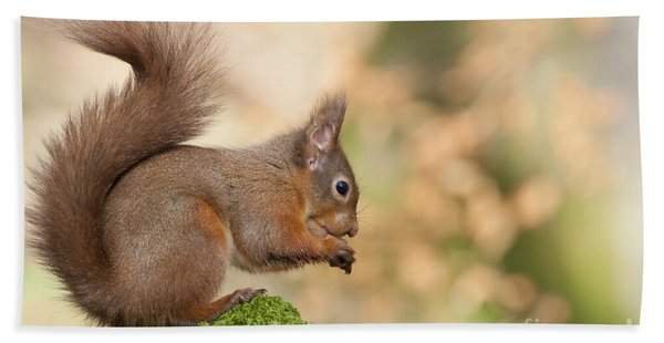 A Moment Of Meditation - Red Squirrel #27 Hand Towel