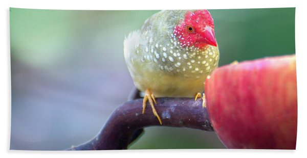 Red Star Finch Hand Towel
